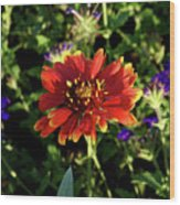 Red Gaillardia Wood Print by Douglas Barnett