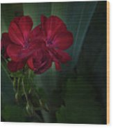 Red Geranium Wood Print