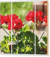 Red Geraniums Triptych Wood Print