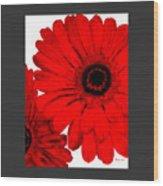 Red Gerber Border     Digital Art  Wood Print