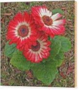 Red Gerbera Daisies Wood Print