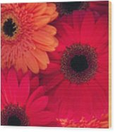 Red Gerbers Wood Print