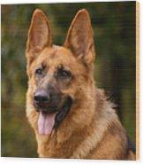 Red German Shepherd Dog Wood Print