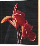 Red Glow Wood Print