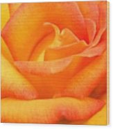 Red Gold Rose Wood Print