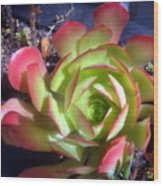 Red Green Succulent Wood Print