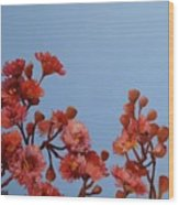 Red Gum Blossoms Australian Flowers Oil Painting Wood Print