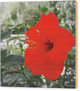 Red Gumamela  Wood Print