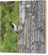 Red Head Bird Wood Print
