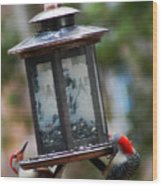 Red Head Wood Peckers On Feeder Wood Print