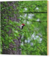 Red Headed Beauty Wood Print