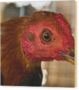 Red Headed Chicken Wood Print