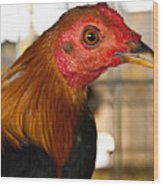 Red Headed Chicken Head Wood Print
