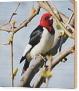 Red-headed Woodpecker At A Glace  Wood Print