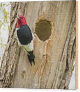 Red-headed Woodpecker At Home Wood Print