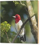 Red-headed Woodpecker Perched On A Tree Wood Print by George Grall