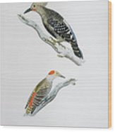 Red Headed Woodpeckers 3 Wood Print