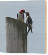 Red Headed Woodpeckers Wood Print