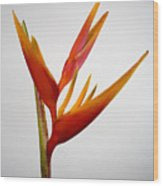 Red Heliconia Wood Print