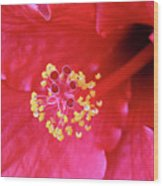 Red Hibiscus 3 Wood Print