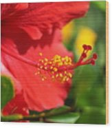 Red Hibiscus And Green Wood Print