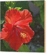 Red Hibiscus II Wood Print