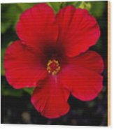 Red Hibiscus - Kauai Wood Print