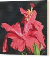 Red Hibiscus Square 2 Wood Print
