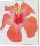 Red Hibiscus Vector Isolated Wood Print