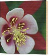 Red Hobbit Columbine Wood Print