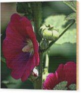Red Hollyhock 1360 H_2 Wood Print