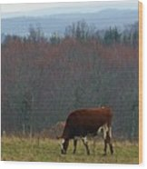 Red Holstein Of The Hills Wood Print