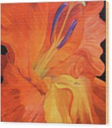Red-hot Flower Wood Print