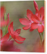 Red Hot Lilies Wood Print