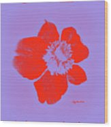 Red Hot Passion Flower Wood Print