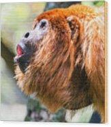 Red Howler Monkey Alpha Male Wood Print