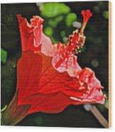 Red Hyacinth At Pilgrim Place In Claremont-california Wood Print