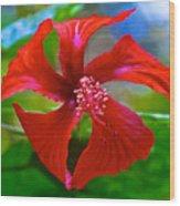 Red Hyacinth In Bourbon Resort Gardens Near Iguazu Falls National Park-brazil  Wood Print