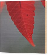Red II Wood Print