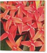 Red Indian Flowers Like Sunshine - Macro Photography Wood Print