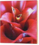 Red Invitation At The Desert Botanical Garden Wood Print