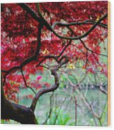 Red Japanese Maple Wood Print