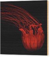 Red Jellyfish Wood Print