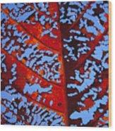 Red Kamani Tree Leaf Wood Print