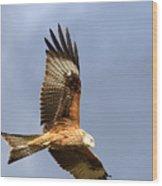 Red Kite Flying Wood Print