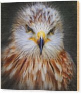 Red Kite Wood Print