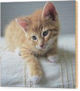 Red Kitten On A Beige Blanket Wood Print