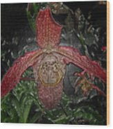 Red Lady Slipper Wood Print