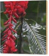 Red Lava Flower Wood Print