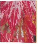 Red Leaf Abstract Wood Print